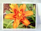 Floral Fine Art Orange Tiger Lily Blank Greeting Card. Photograph by Jere WIlson