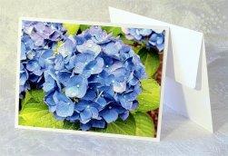 Floral Fine Art Blue Hydrangea Flower Greeting Card - Original Photo by Jere Wilson